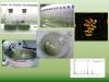 cyanobacteria and microalgae